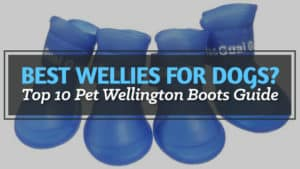 Best-Wellies-for-Dogs-Top-10-Pet-Wellington-Boots-Guide