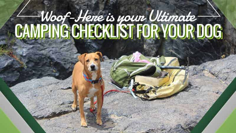 Woof-Here-is-your-Ultimate-Camping-Checklist-for-your-Dog