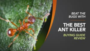 Best Ant Killer Uk Buying Guide Review