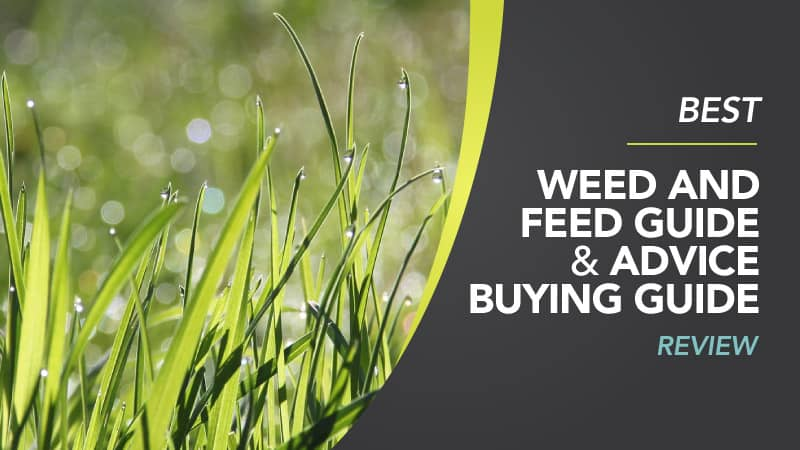 Best Weed and Feed - Weed and Feed Review Guide (Uk)