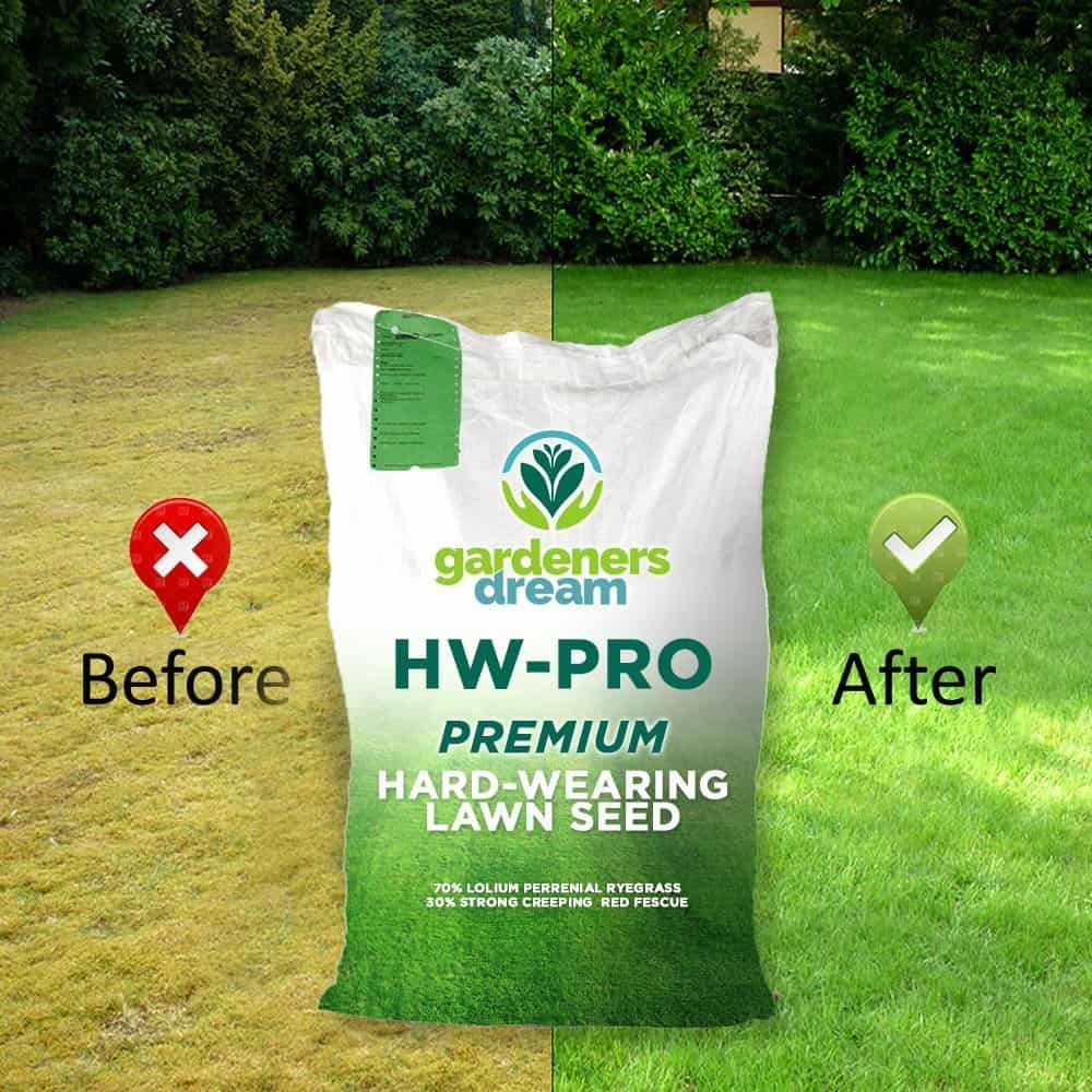 est Grass Seed for Dogs – Gardeners Dream