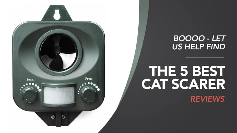 Boooo-Let-Us-Help-Find-the-5-Best-Cat-Scarer-Reviews