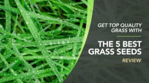 Get-Top-Quality-Grass-With-The-5-Best-Grass-Seeds-Review