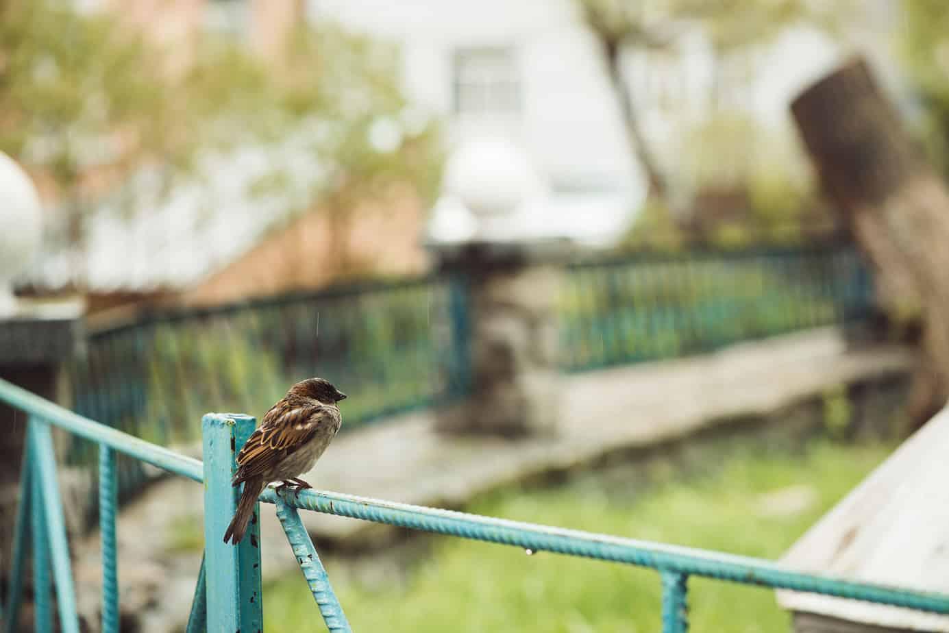 Start Feeding Birds